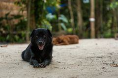 Black hair dog relaxing on white sand Royalty Free Stock Images