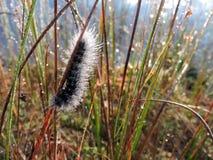 Black  hairy caterpillar , Lithuania Stock Photos