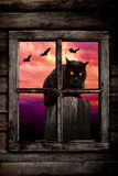 Black Halloween Cat. Black cat behind a window with ravens flying in the background on the night of Halloween stock image