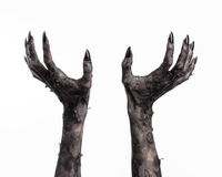 Black hand of death, the walking dead, zombie theme, halloween theme, zombie hands, white background, mummy hands Royalty Free Stock Images
