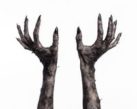 Black hand of death, the walking dead, zombie theme, halloween theme, zombie hands, white background, mummy hands. The hands of the devil, hands monster Royalty Free Stock Photography