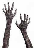 Black hand of death, the walking dead, zombie theme, halloween theme, zombie hands, white background, mummy hands Stock Photo