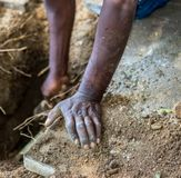 Black hands digging in the soil. Black hands doing manual labor digging in the soil image with copy space stock photos