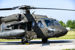 Black Hawk Royalty Free Stock Image