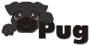 Black head of pug with letters Stock Photography
