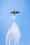 Black-headed gull Stock Image