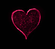 Black Heart Bokeh Royalty Free Stock Photo