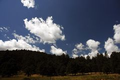 Black Hills of Dakota. Blue sky and cloudscape over forest in Black Hills of Dakota, U.S.A Royalty Free Stock Image