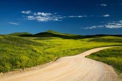 Black Hills i South Dakota royaltyfri bild