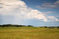 Black Hills i South Dakota royaltyfria bilder