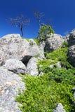 Black Hills National Forest Stock Images