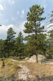 Black Hills nationalskog, South Dakota, USA royaltyfria foton