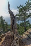 Black Hills nationalskog, South Dakota, USA royaltyfria bilder