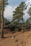 Black Hills nationalskog, South Dakota, USA royaltyfri bild