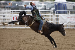 Black Hills Roundup Rodeo Royalty Free Stock Images