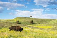 Black Hills South Dakota arkivfoton