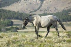 Black Hills vildhästfristad, royaltyfria foton