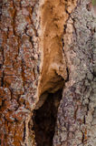 Black hole in tree trunk. As entry to bird nest Royalty Free Stock Photos