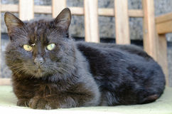 Black homeless cat with green eyes.  Royalty Free Stock Photos