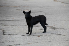 Black homeless dog in a city park Stock Image