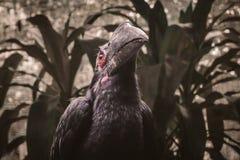 Black hornbill. Birdphotography, animal, forest stock photo