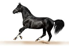Black Horse. On a white background Royalty Free Stock Photography