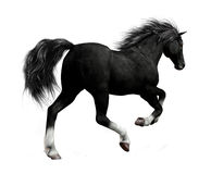 Black Horse. A mighty black horse galloping with beautiful mane and tail vector illustration
