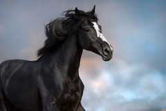 Black horse against sky Stock Photography