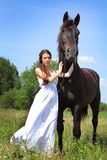 Black horse Stock Images