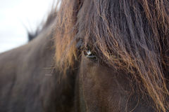 Black Horse with Blue Eyes Royalty Free Stock Photos
