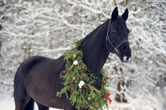 Black horse with christmas wreath. Winter stock image