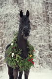 Black horse with christmas wreath. Winter royalty free stock images