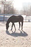 Black horse at the cold weather Royalty Free Stock Photos