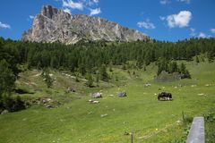 Black Horse and Cows Pasturing in Grazing Lands: Italian Green Meadows in Alps Scenery Stock Photos