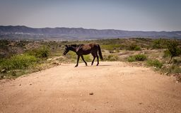 Black horse crossing the street. Mountain landscape