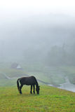 Black horse eating grass field amidst fog in morning Royalty Free Stock Photos