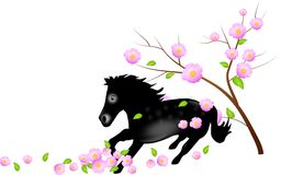 Black horse with falling blooms of tree Stock Images