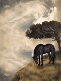 Black horse. In a fantasy field landscape Royalty Free Stock Photos