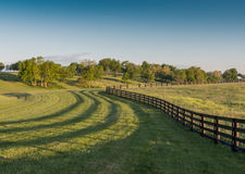 Black Horse Farm Fence and Shadows Wind. Around Kentucky Hills Royalty Free Stock Photography