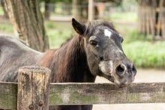Black horse the fence royalty free stock image