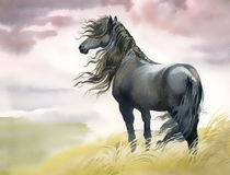 Black horse in a field. Watercolor Stock Images