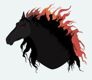 Black horse. With fiery mane Stock Image