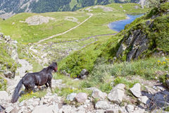Black horse going down of a mountain to a lake Royalty Free Stock Photography