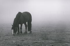 Black Horse on Grey Soil With Fogs Stock Image