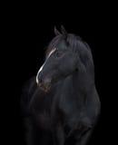 Black horse head on black Royalty Free Stock Image