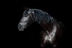 Black horse head isolated on black Stock Photo