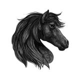 Black horse head profile portrait Royalty Free Stock Photo