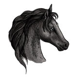 Black horse head sketch portrait. Horse portrait. Black mustang profile with wavy mane and proud noble look. Artistic vector sketch Vector Illustration