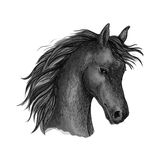 Black horse head sketch portrait. Horse portrait. Black mustang profile with wavy mane and shy look. Artistic vector sketch portrait royalty free illustration