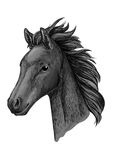 Black horse head sketch portrait. Black horse portrait. Stallion modestly looking down with wavy mane. Artistic vector sketch portrait Vector Illustration